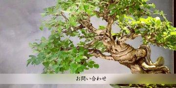 image-head-toiawase